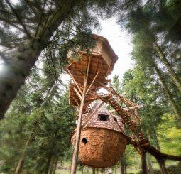 Ma cabane dans les bois